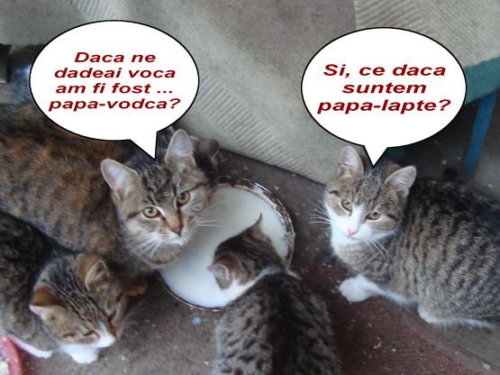 b pisici DSC06876