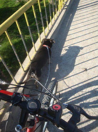 4 Ulise bicicleta